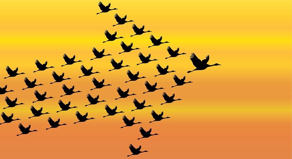 Leiderschap, governance en management 3