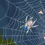Spin in het web 12